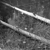 two logs in Bliss lake.jpg